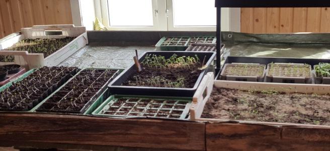 Grønnsakskasse fra Evje gård